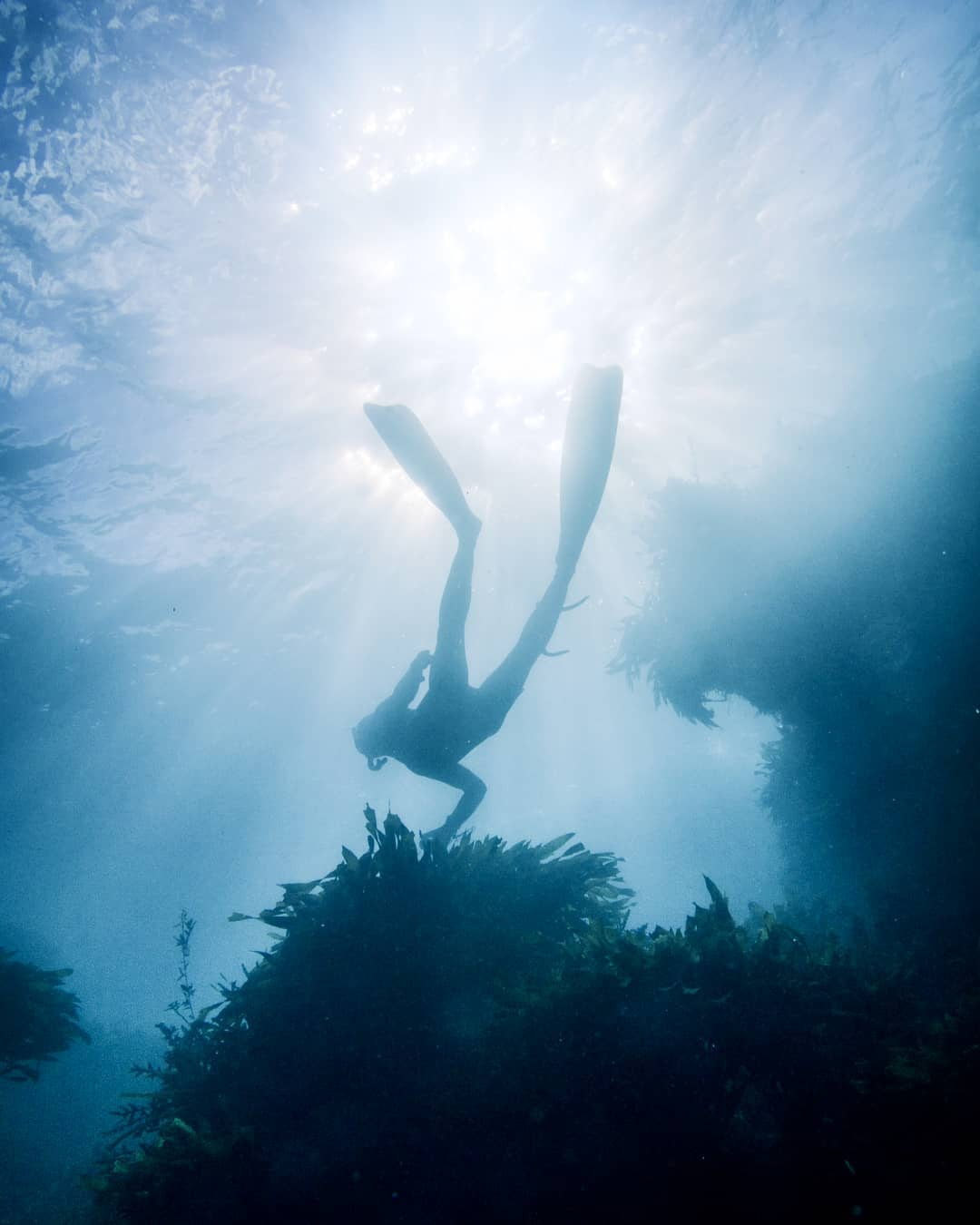 Silhouette of a freediver underwater